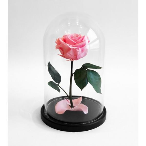 Роза в колбе нежно розовая
