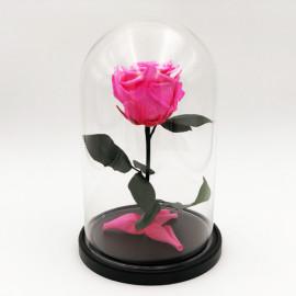 Роза в колбе ярко розовая